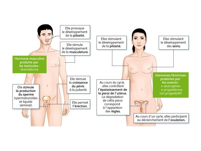 Sexualité et reproduction
