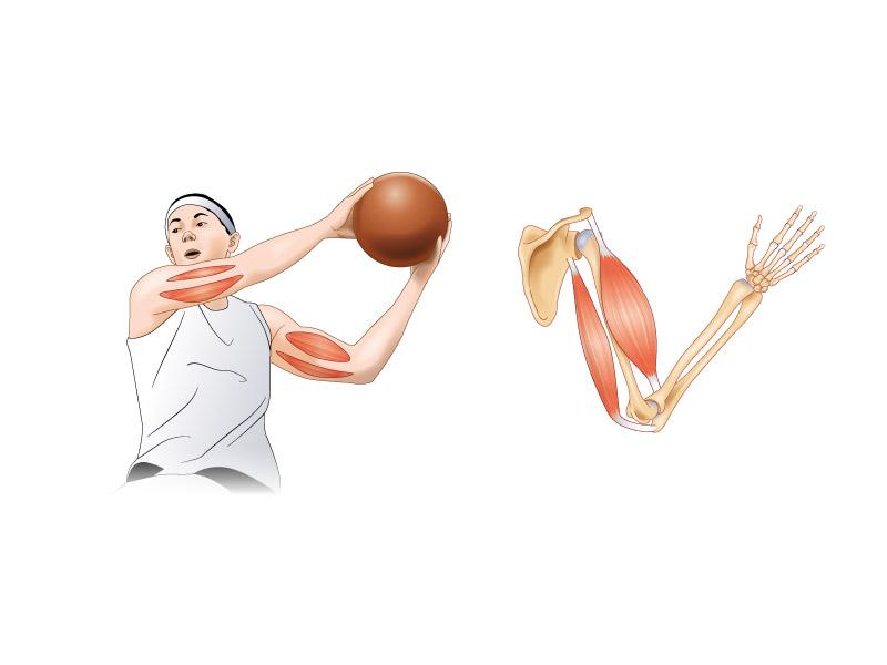 Les mécanismes du corps