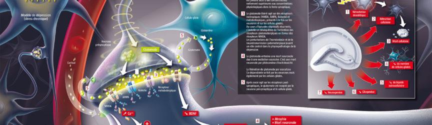 illustration-medicale-scientifique-didactique-depression