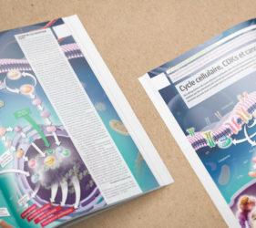 illustration-medicale-scientifique-cdks-cancers-03