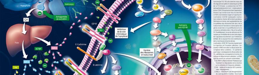 illustration-medicale-scientifique-oncologie-cancers-oncogenese-recepteur-presse-magazine