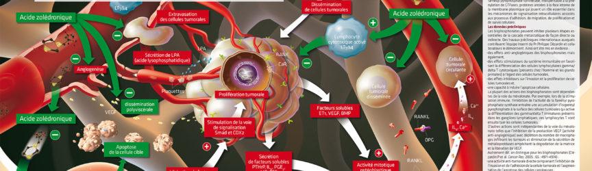 illustration-scientifique-medicale-oncologie-cancers-sein-metastase-tumorale-presse-magazine